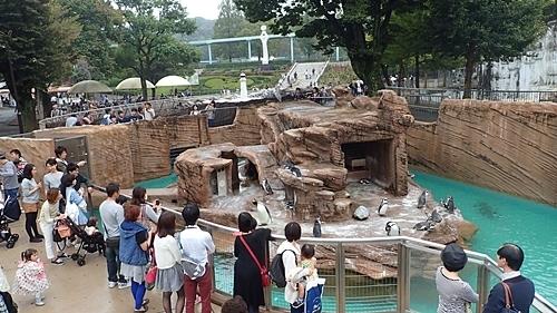 190103 東山zoo_ペンギン舎1510.JPG