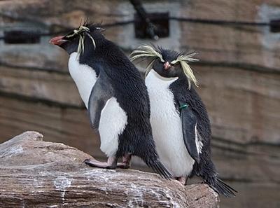 190103 東山zoo_ペンギン_イワトビ.JPG