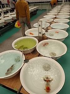 190114 1804 日本観賞魚フェア.JPG