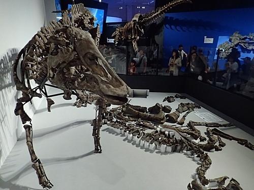 1907科博_恐竜博2019_41(146)むかわ竜.JPG