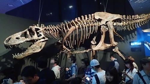 1907科博_恐竜博2019_50(179)_ティラノサウルス.JPG