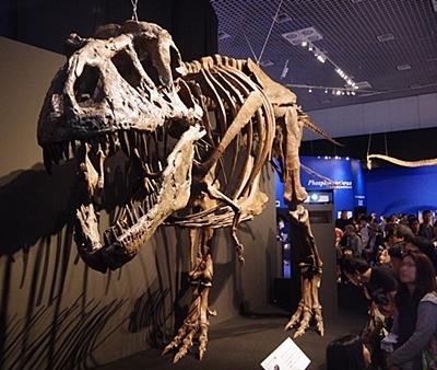 1907科博_恐竜博2019_51(73)_ティラノサウルス.JPG
