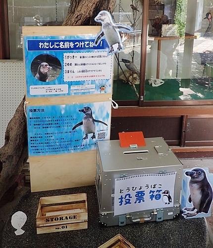 190825 小諸市zoo27_0817o (35)ペンギンひなの名前投票箱.JPG