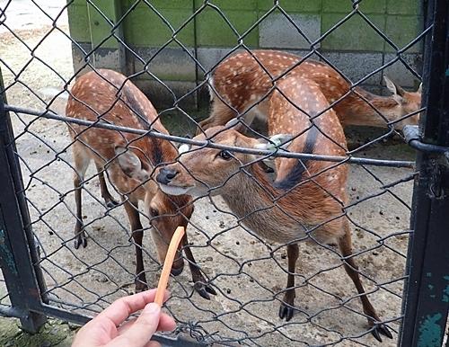 190825 小諸市zoo51_0817o (117)ヤクシカ_えさやり.JPG