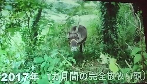 191208エンリッチメント大賞037_1207  (141)スライド_大森山動物園_トナカイ_放牧.JPG