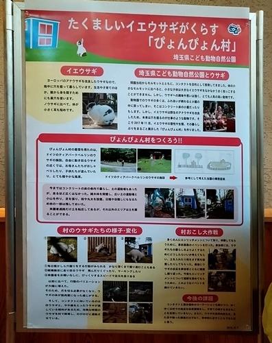 191221エンリッチメント大賞2019_37_1207s (5)ポスター_埼玉こども動物自然公園_イエウサギ_.JPG