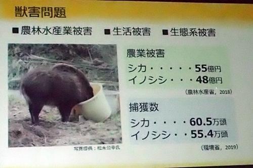 191231エンリッチメント大賞011_1207 (160)インパクト賞_スライド_大牟田市Zoo_gaiju - コピー.JPG