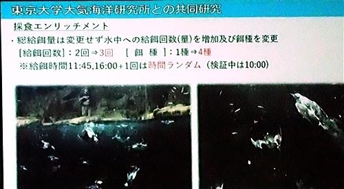 191231エンリッチメント大賞054_1207 (199)スライド_葛西臨海水族園_海鳥_2ndStudy.JPG
