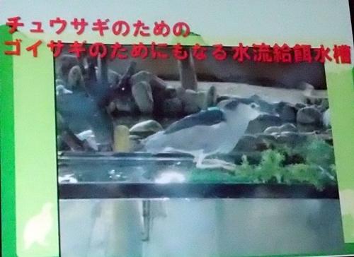 191231エンリッチメント大賞160_1207 (223)スライド_飯田市立動物園_ゴイサギ.JPG