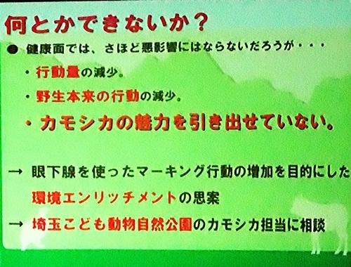 191231エンリッチメント大賞161_1207 (230)スライド_飯田市立動物園_ニホンカモシカ.JPG