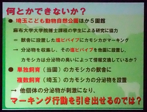 191231エンリッチメント大賞162_1207(234)スライド_飯田市立動物園_ニホンカモシカ_マーキング.JPG