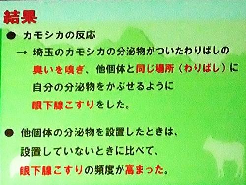 191231エンリッチメント大賞163_1207(248)スライド_飯田市立動物園_ニホンカモシカ_kekka.JPG