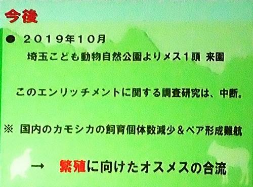 191231エンリッチメント大賞170_1207(256)スライド_飯田市立動物園_ニホンカモシカ_マーキング_終了.JPG