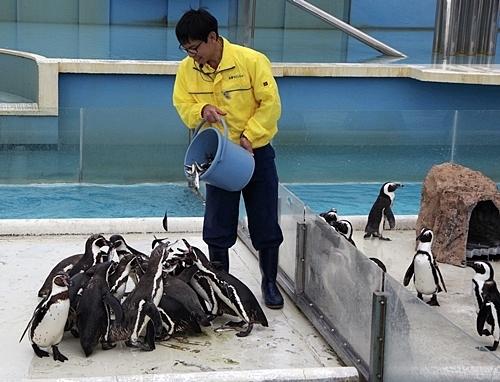 200119志摩マリンランド_17_190331p (159)フンボルトペンギン_えさやり.JPG