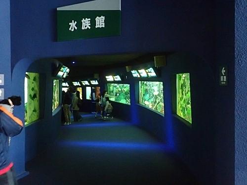 200119志摩マリンランド_30_190331o(19)水族館.JPG