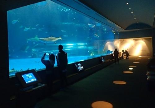 200229 しまねAQUAS_10_0208o (67)大水槽「神話の海」.JPG