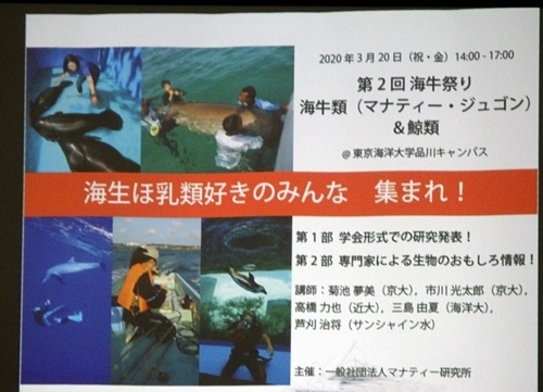 200311-9 マナティ0307R(34)アフリカマナティの保全プロジェクト報告会_海牛祭り告知.JPG