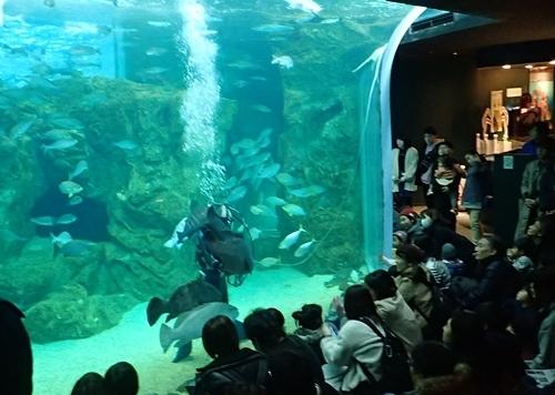 200314_06しものせき海響館0209o (23)関門ダイブ_大水槽「関門海峡潮流水槽」.JPG