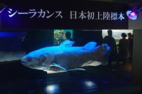 200314_17しものせき海響館0209o (161)シーラカンス_日本初上陸標本.JPG