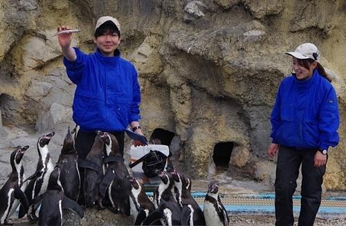200322_55 海響館0209p (805)フンボルトペンギン_ごっくんタイム_.JPG