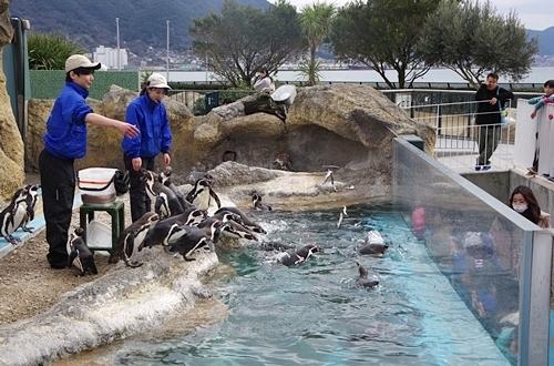 200322_56 海響館0209p (822)フンボルトペンギン_ごっくんタイム_投入.JPG