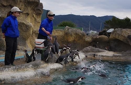 200322_56 海響館0209p (892)フンボルトペンギン_ごっくんタイム_.JPG