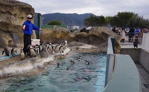 200322_59 海響館0209p (926)フンボルトペンギン_ごっくんタイム_えさ終了.JPG