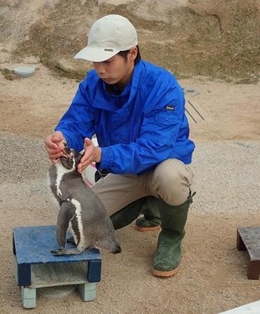 200322_85 海響館0209o (335)フンボルトペンギン_トレーニング.JPG