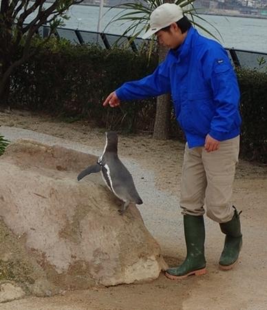 200322_86 海響館0209o (335)フンボルトペンギン_トレーニング.JPG