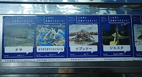200323 29マリンワ海の中道0210o (397)この子に名前がつきました.JPG