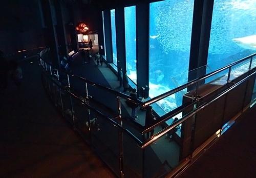 200323 53マリンワ海の中道0210o (171)外洋大水槽.JPG