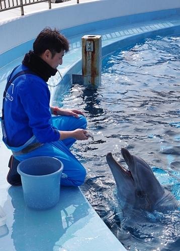 200323 73マリンワ海の中道0210p (328)カマイルカ_かいじゅうアイランド.JPG