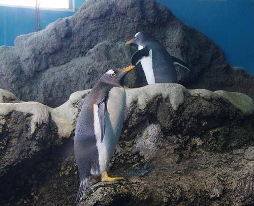200426ジェンツー週間_箱根園水族館180217p (416).JPG