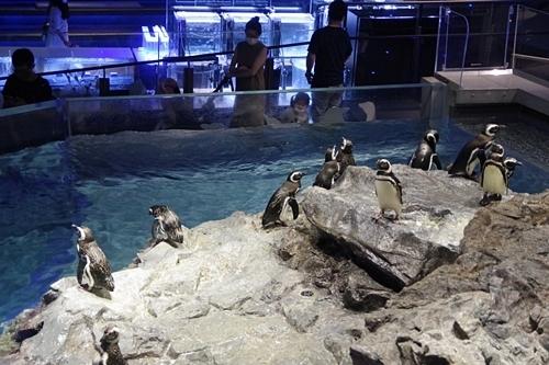 200628すみだ水族館_21_0624p (5)マゼランペンギン.JPG