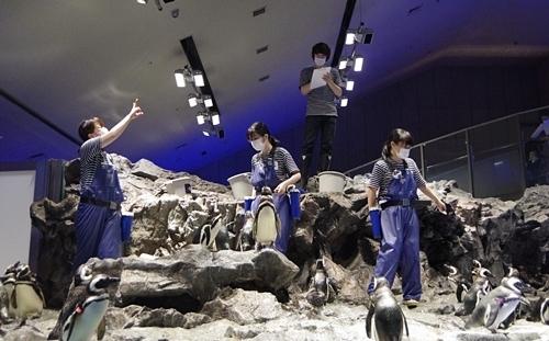 200628すみだ水族館_24_0624p (102)マゼランペンギン_お食事タイム.JPG