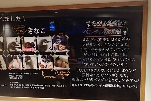 200628すみだ水族館_33_0624o (36)ペンギン赤ちゃん情報.JPG
