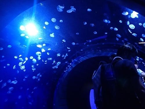 200711サンシャイン水_08_o (102)海月空感_クラゲトンネル.JPG