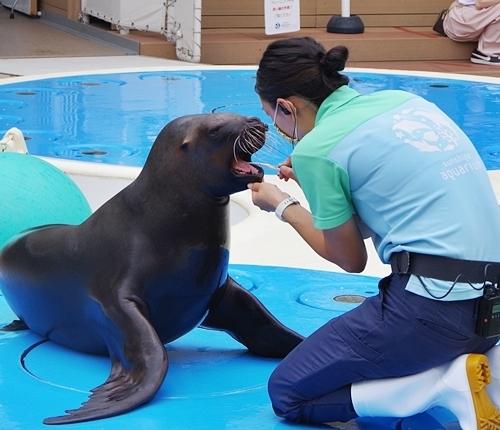 200711サンシャイン水_22_p (20)○アシカ_トレーニング_歯みがき.JPG