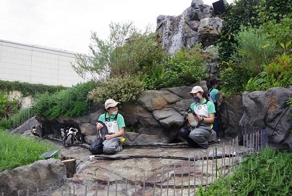 200711サンシャイン水_31_p (44)草原のペンギン_飼育スタッフ.JPG