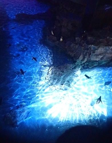 200712すみだ水族館_51_0711o (72)プロジェクションマッピング「ペンギン花火」.JPG