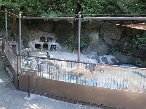 200823 伊豆シャボテン公園-110_0813o (51)ケープペンギン舎.JPG