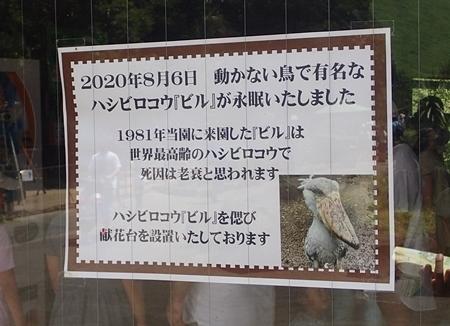 200823 伊豆シャボテン公園-121_0813o (243)ハシビロコウ_ビル_死亡のお知らせ.JPG
