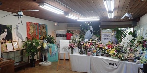 200823 伊豆シャボテン公園-121_0813o (247)ハシビロコウ_ビル_追悼.JPG