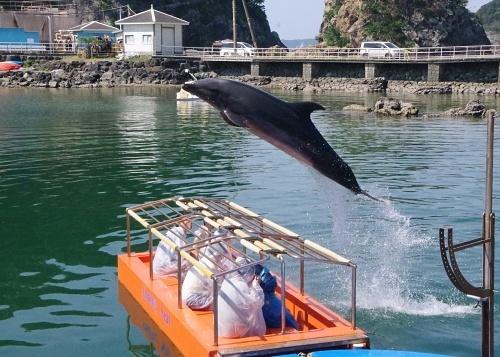 200922 下田海中水族館12_0814p (60)湾内イルカショー_特別席の上をジャンプ.JPG