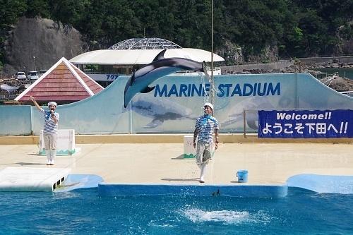 200922 下田海中水族館31_0814p (280)アシカ・イルカショー_カマイルカ「エス」.JPG
