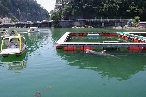 200922 下田海中水族館52_0814p (442)イルカウォッチングボート.JPG