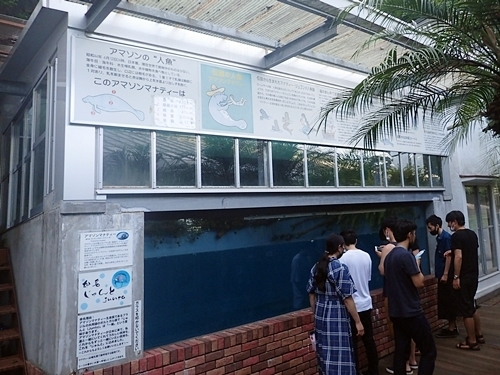 2009熱川バナナワニ園50_0813o (102)アマゾンマナティ_じゅんと水槽.JPG