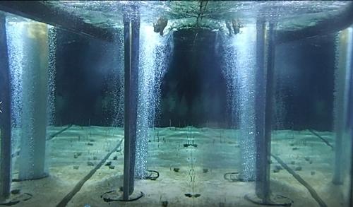 2011 チンアナゴの日09_すみだ水族館1111o (--)えさ投入.JPG
