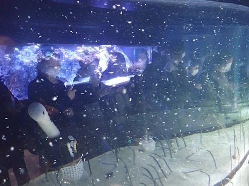 2011 チンアナゴの日10_すみだ水族館1111o (61)えさ投入.JPG