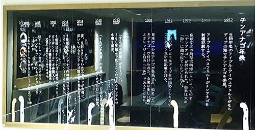 2011 チンアナゴの日52_すみだ水族館1111o (208)アクアアカデミー.JPG